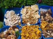 Biodiversidad y seguridad alimentaria