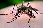 Integridad ecosistémica y salud humana: el caso de las enfermedades transmitidas por insectos