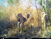 Persistencia de fauna silvestre en paisajes modificados de Veracruz