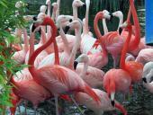 Zoológicos: esfuerzos incomprendidos conservando fauna