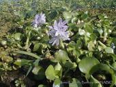 Globalización y biodiversidad: especies exóticas invasoras
