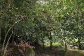 ¿Pueden los bosques ser invisibles?