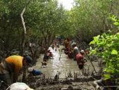Restauración de manglares: ¡a combinar ecología con ingeniería ambiental!