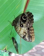 Jardin de mariposas