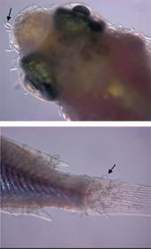 Las Matrioskas y sus microorganismos