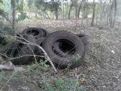 Investigando nuevos métodos para controlar los zancudos en el estado de Veracruz