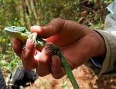 Los mitos y sus consecuencias en la conservación de los anfibios y reptiles mexicanos